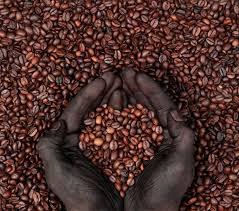 haitian-coffee